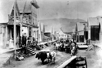 Barkerville Cattle Drive The Quesnel Rodeo is the largest amateur rodeo in ...
